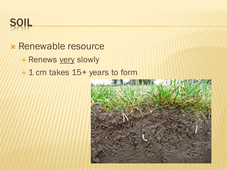  Renewable resource  Renews very slowly  1 cm takes 15+ years to form