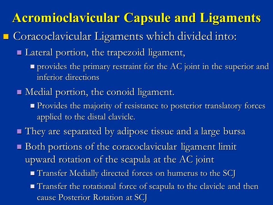 Acromioclavicular Capsule and Ligaments Coracoclavicular Ligaments which divided into: Coracoclavicular Ligaments which divided into: Lateral portion,
