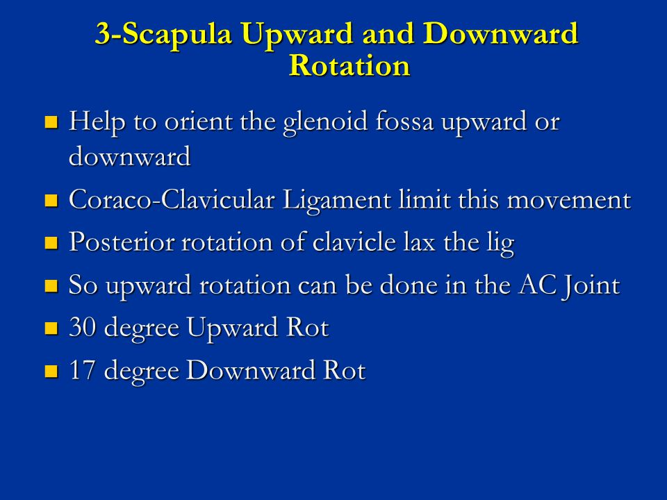 3-Scapula Upward and Downward Rotation Help to orient the glenoid fossa upward or downward Help to orient the glenoid fossa upward or downward Coraco-