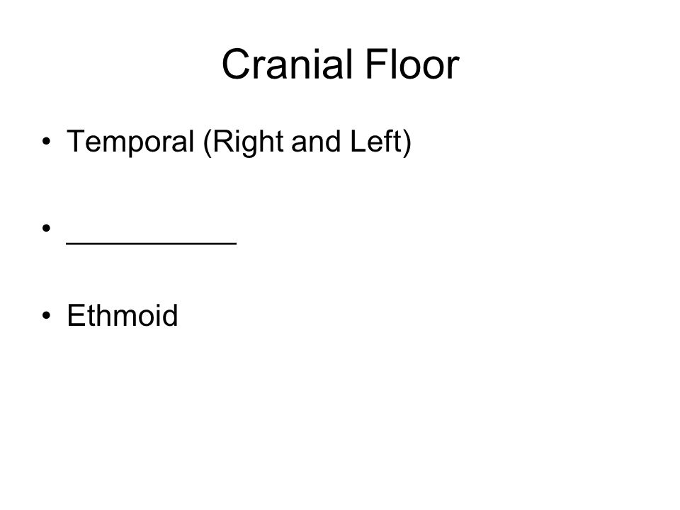 Cranial Floor Temporal (Right and Left) __________ Ethmoid