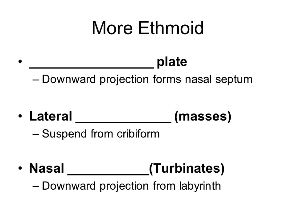 More Ethmoid _________________ plate –Downward projection forms nasal septum Lateral _____________ (masses) –Suspend from cribiform Nasal ___________(Turbinates) –Downward projection from labyrinth