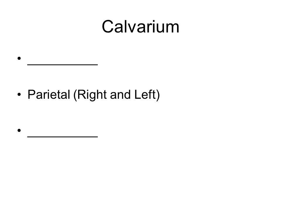 Suture Articulations Adult ____________ –Frontal and parietals ____________ –Occipital and parietals ___________ Rt/Lt –GW of sphenoid, temporal, parietal, frontal ___________ Rt/Lt –Temporal, occipital, parietal