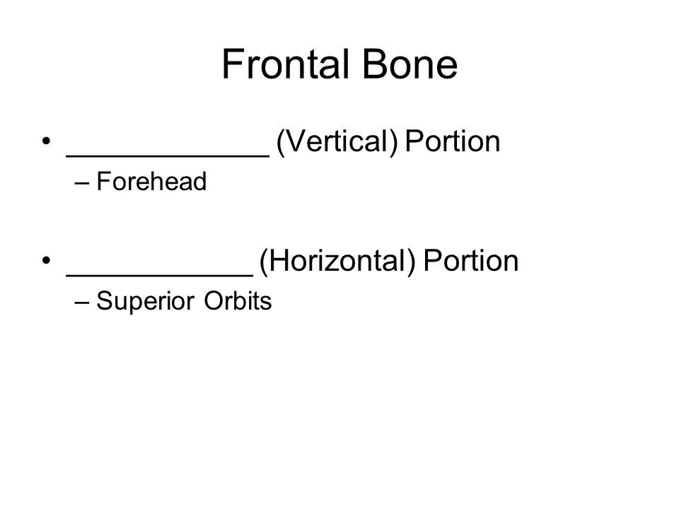 Frontal Bone Squamous ___________ –Area between eyebrows _____________ Groove –Depression above eyebrows ______________margin –Superior rim of orbit _____________ ridge (Arch) –Ridge beneath eyebrow