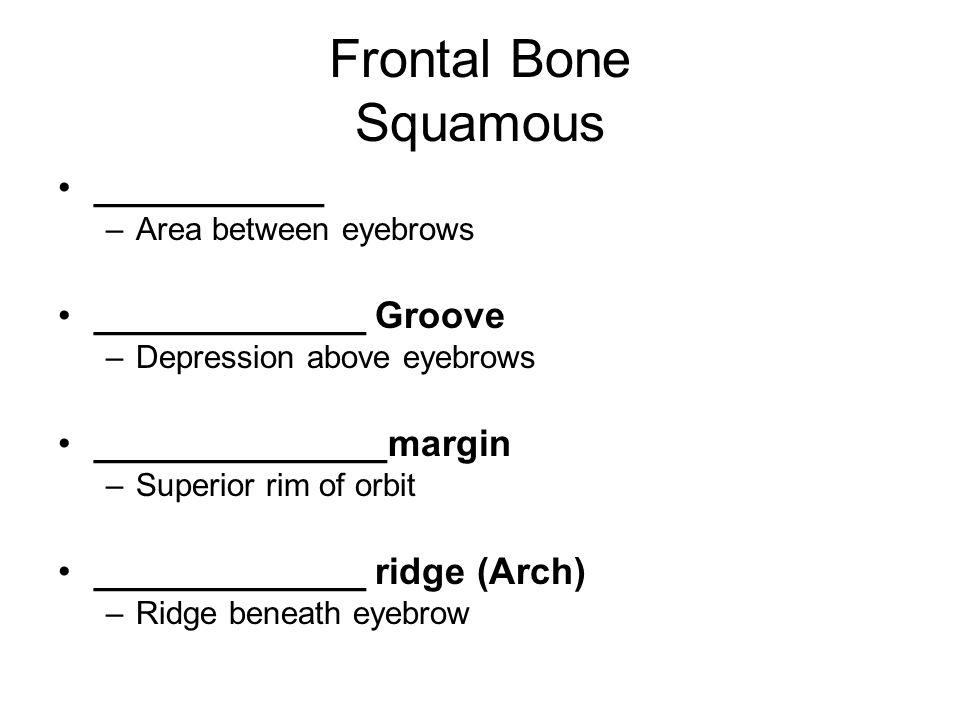 Frontal Bone Orbital _____________plate –Superior portion of each orbit _______________ Notch –Separates orbital plate Articulates with 4 cranial bones –Right and left parietals, sphenoid, _________