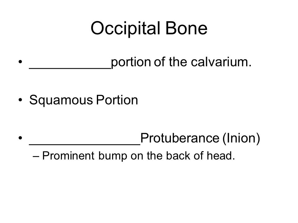 Occipital ____________Magnum –Hole for spinal cord _______________ condyles –Articulating surface on each side of foramen magnum.