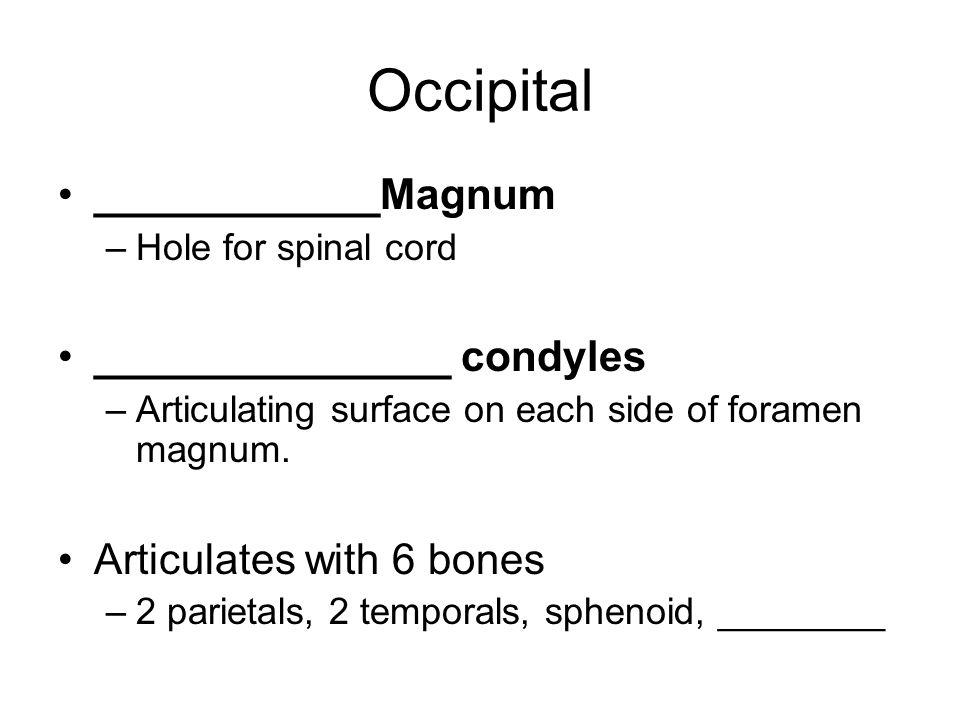 Ethmoid Bone Small bone lying primarily below floor of cranium.