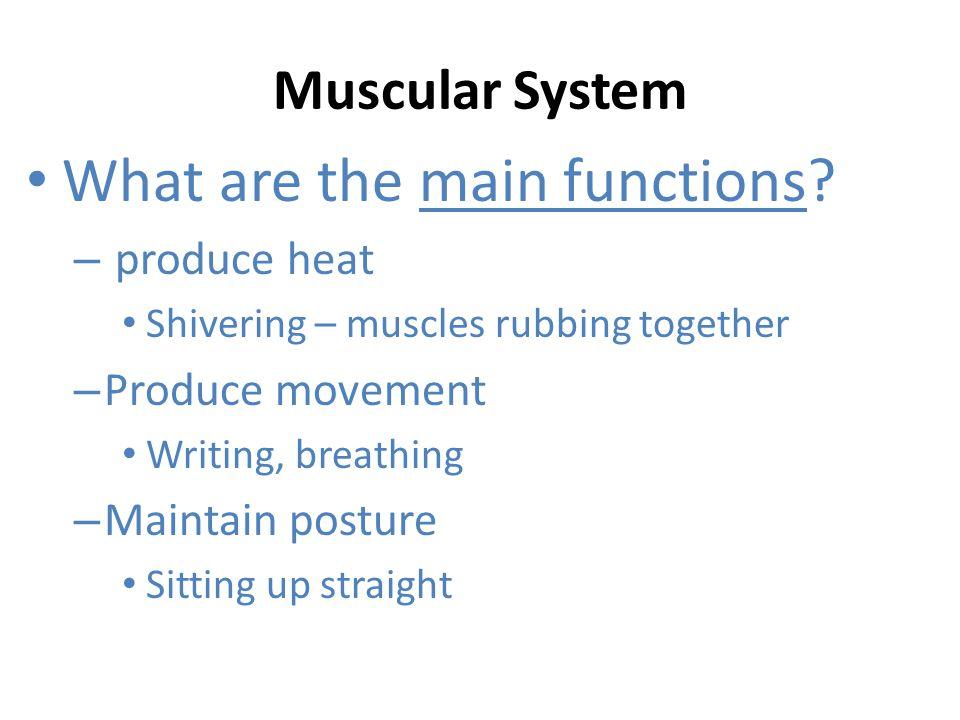 Muscles of the Anterior Abdominal Wall Transverse Abdominis Rectus Abdominis Internal Oblique External Oblique