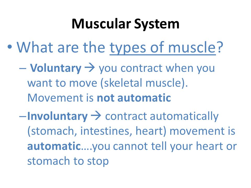 Muscular System What are tendons.