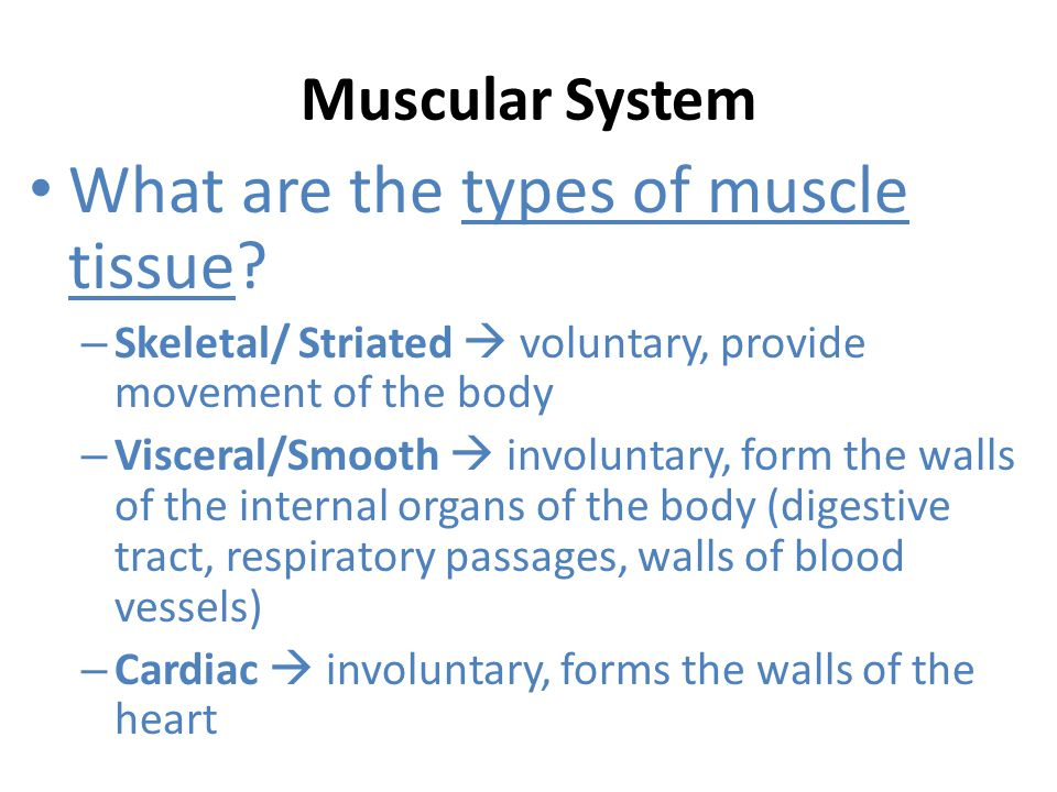 Muscular System What are the basic movements of skeletal muscle.