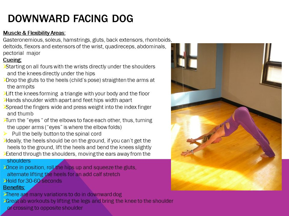 DOWNWARD FACING DOG Muscle & Flexibility Areas: Gasteronemious, soleus, hamstrings, gluts, back extensors, rhomboids, deltoids, flexors and extensors of the wrist, quadireceps, abdominals, pectorial major Cueing:  Starting on all fours with the wrists directly under the shoulders and the knees directly under the hips  Drop the gluts to the heels (child's pose) straighten the arms at the armpits  Lift the knees forming a triangle with your body and the floor  Hands shoulder width apart and feet hips width apart  Spread the fingers wide and press weight into the index finger and thumb  Turn the eyes of the elbows to face each other, thus, turning the upper arms ( eyes is where the elbow folds)  Pull the belly button to the spinal cord  Ideally, the heels should be on the ground, if you can't get the heels to the ground, lift the heels and bend the knees slightly  Extend through the shoulders, moving the ears away from the shoulders  Once in position, roll the hips up and squeeze the gluts, alternate lifting the heels for an add calf stretch  Hold for 30-60 seconds Benefits:  There are many variations to do in downward dog  Great ab workouts by lifting the legs and bring the knee to the shoulder or crossing to opposite shoulder