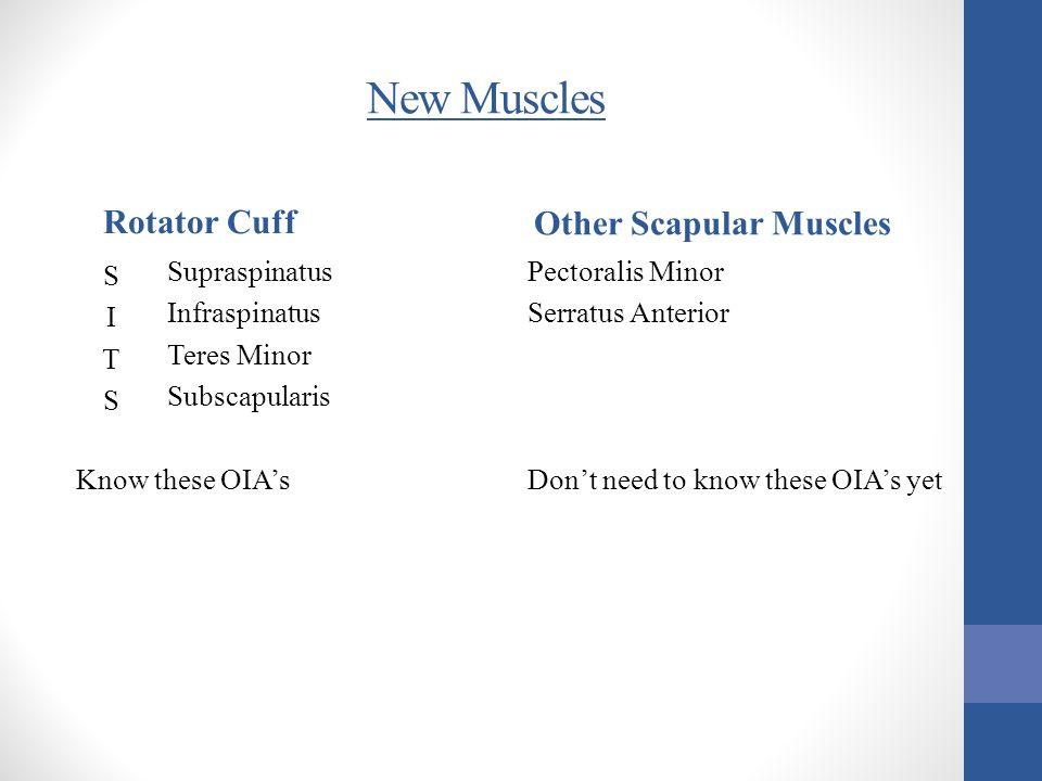 Two other new muscles Pectoralis Major Serratus Anterior