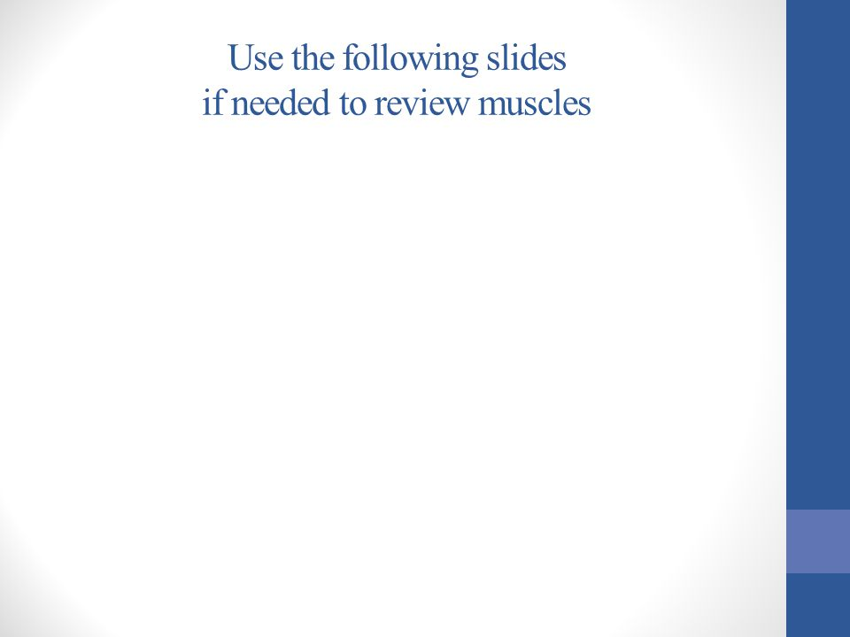 Use the following slides if needed to review muscles