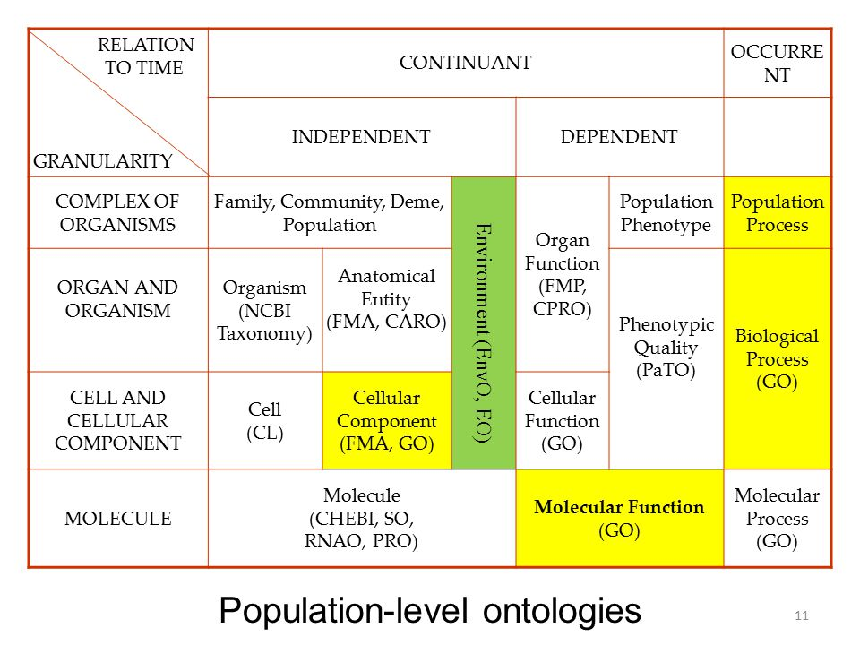 RELATION TO TIME GRANULARITY CONTINUANT OCCURRE NT INDEPENDENTDEPENDENT COMPLEX OF ORGANISMS Family, Community, Deme, Population Organ Function (FMP, CPRO) Population Phenotype Population Process ORGAN AND ORGANISM Organism (NCBI Taxonomy) Anatomical Entity (FMA, CARO) Phenotypic Quality (PaTO) Biological Process (GO) CELL AND CELLULAR COMPONENT Cell (CL) Cellular Component (FMA, GO) Cellular Function (GO) MOLECULE Molecule (CHEBI, SO, RNAO, PRO) Molecular Function (GO) Molecular Process (GO) Population-level ontologies 11 Environment (EnvO, EO)