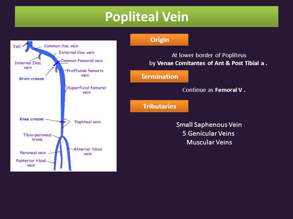 Origin At lower border of Popliteus by Venae Comitantes of Ant & Post Tibial a.
