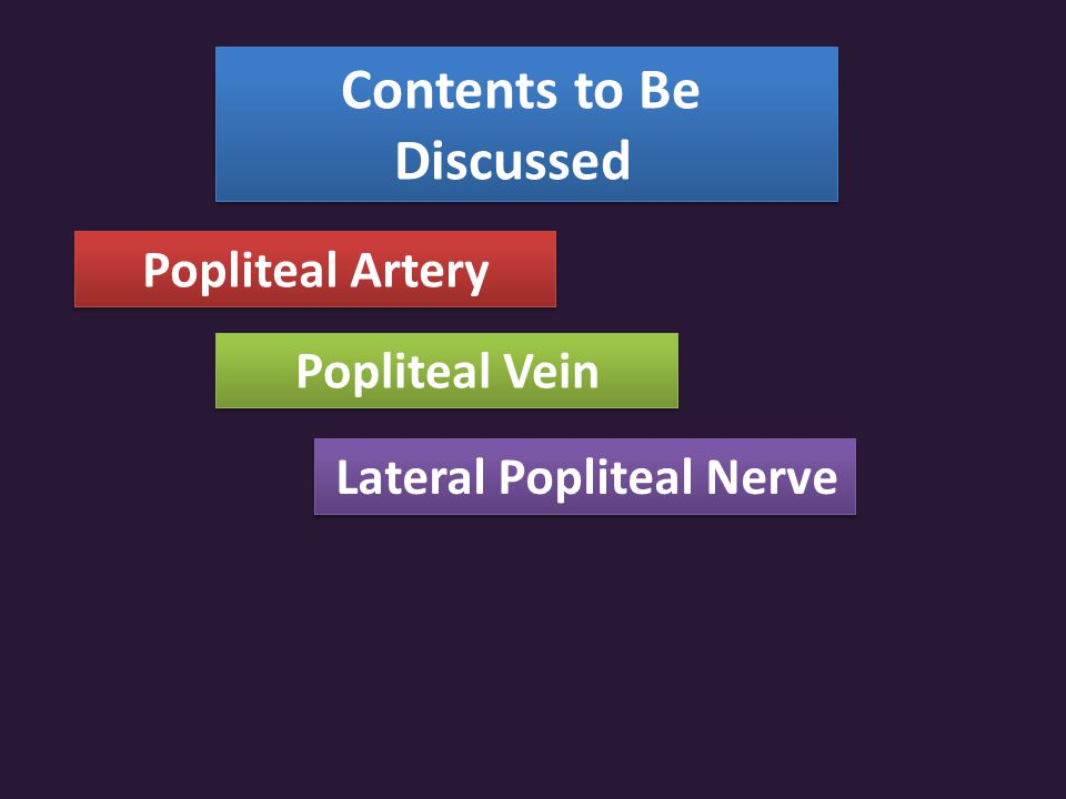 Contents to Be Discussed Popliteal Artery Popliteal Vein Lateral Popliteal Nerve