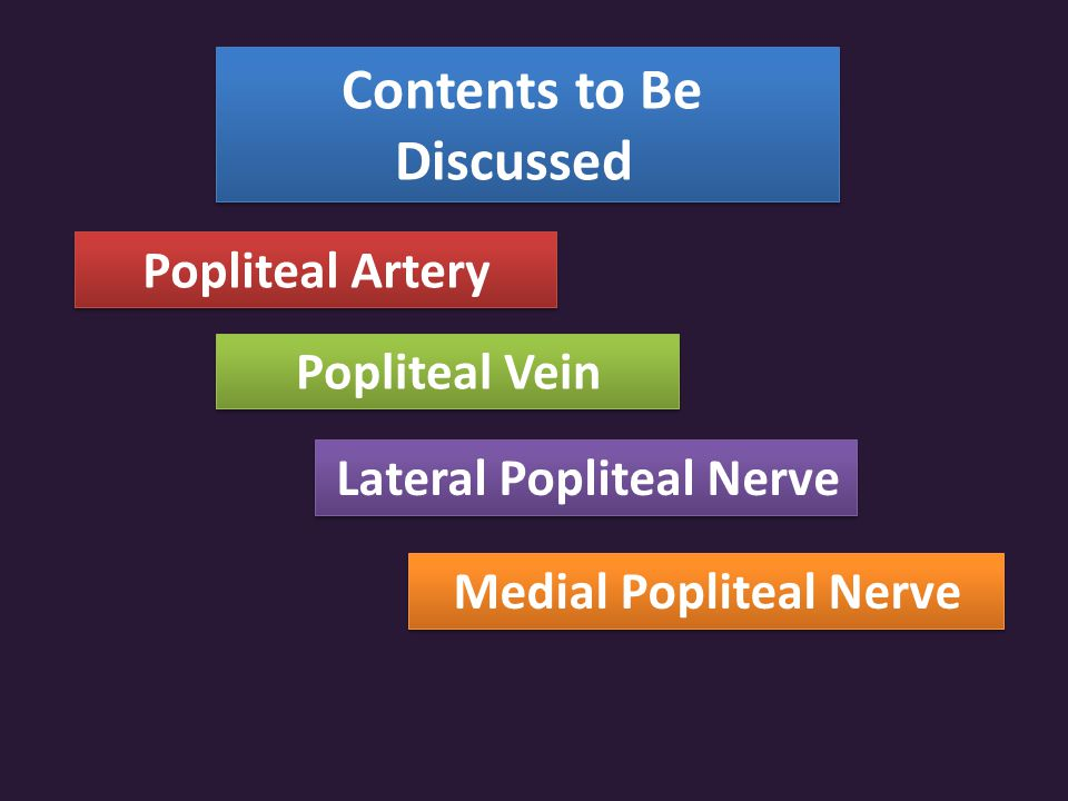Contents to Be Discussed Popliteal Artery Popliteal Vein Lateral Popliteal Nerve Medial Popliteal Nerve