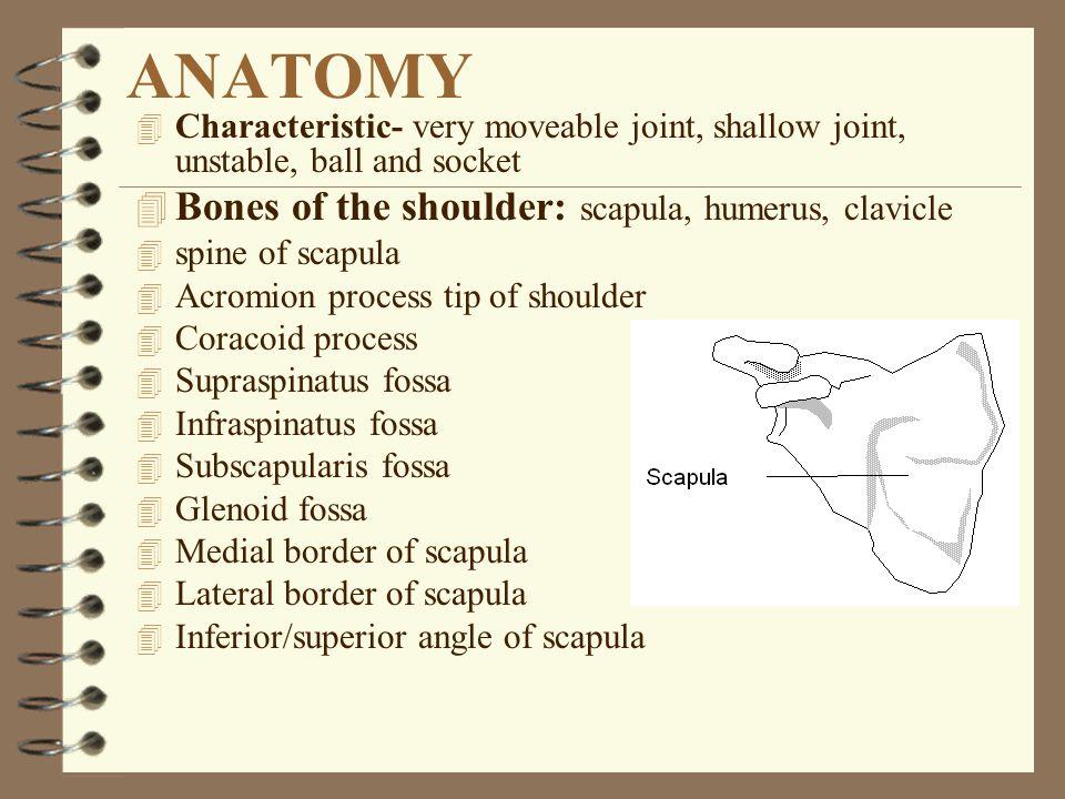 Vocabulary 4 Brachial plexus 4 Impingement 4 Labrum 4 Thoracic outlet compression syndrome 4 Trigger point 4 Axilla 4 Shoulder pointer 4 Shoulder articulations