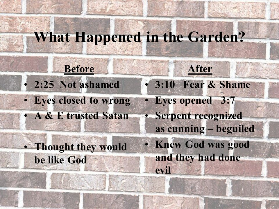 What Happened in the Garden? Before 2:25 Not ashamed Eyes closed to wrong A & E trusted Satan Thought they would be like God After 3:10 Fear & Shame E