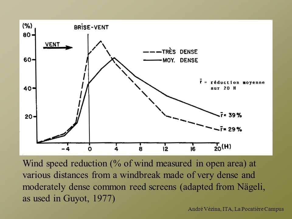André Vézina, ITA, La Pocatière Campus Wind speed reduction (% of wind measured in open area) at various distances from a windbreak made of very dense and moderately dense common reed screens (adapted from Nägeli, as used in Guyot, 1977) Wind Windbreak Very dense Moderately dense Average reduction on 20H