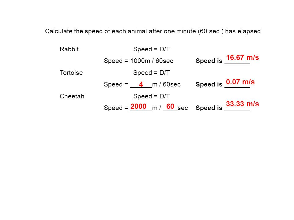 Calculate the speed of each animal after one minute (60 sec.) has elapsed.