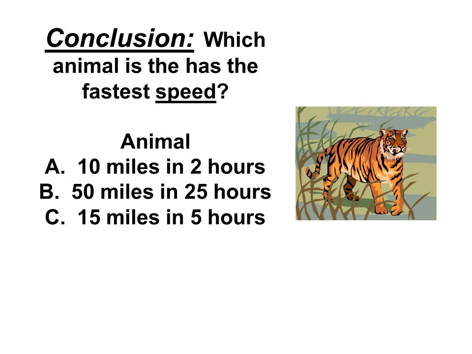 Conclusion: Which animal is the has the fastest speed.