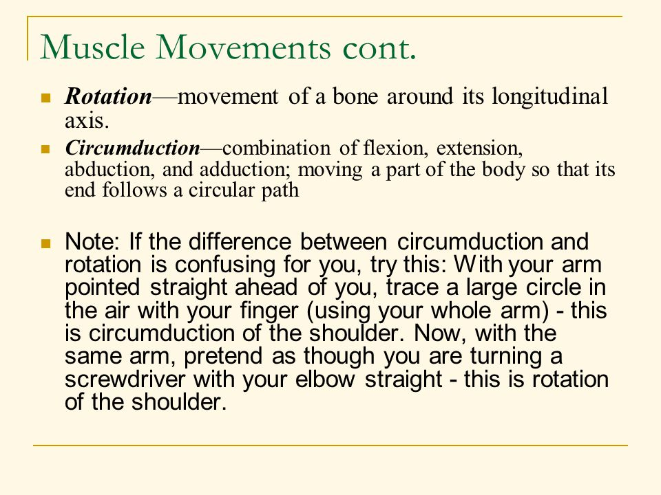 Muscle Movements cont. Rotation—movement of a bone around its longitudinal axis. Circumduction—combination of flexion, extension, abduction, and adduc