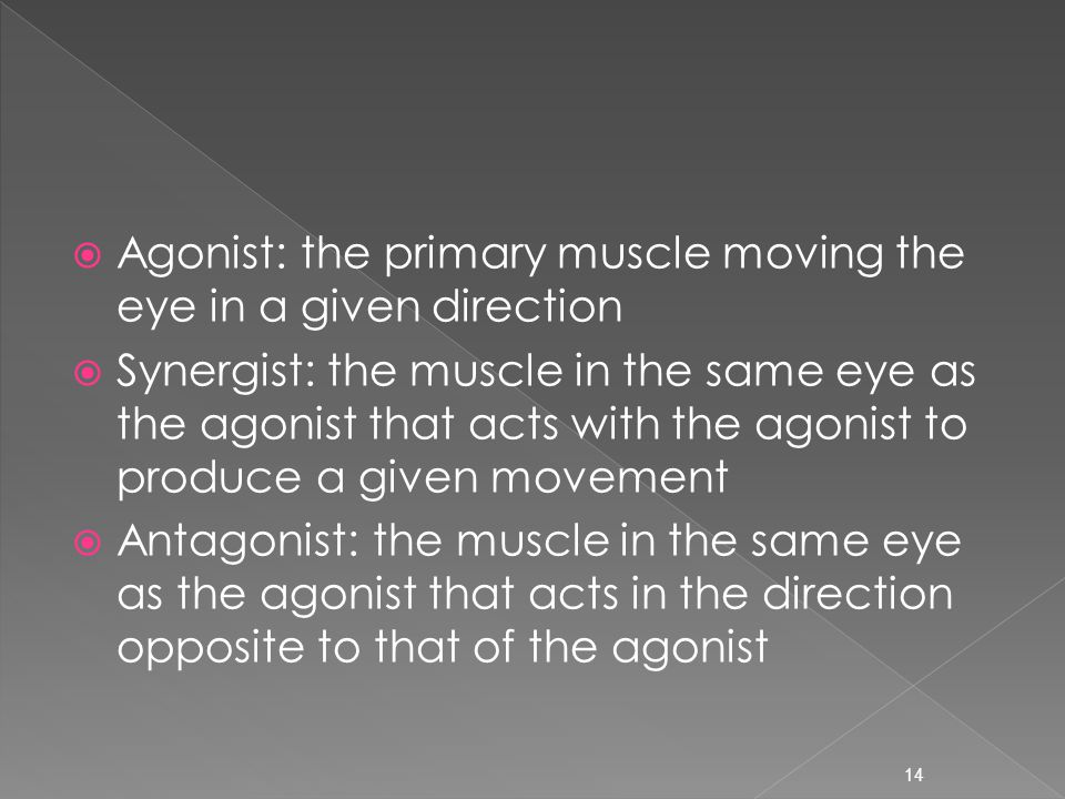 Agonist: the primary muscle moving the eye in a given direction  Synergist: the muscle in the same eye as the agonist that acts with the agonist to produce a given movement  Antagonist: the muscle in the same eye as the agonist that acts in the direction opposite to that of the agonist 14