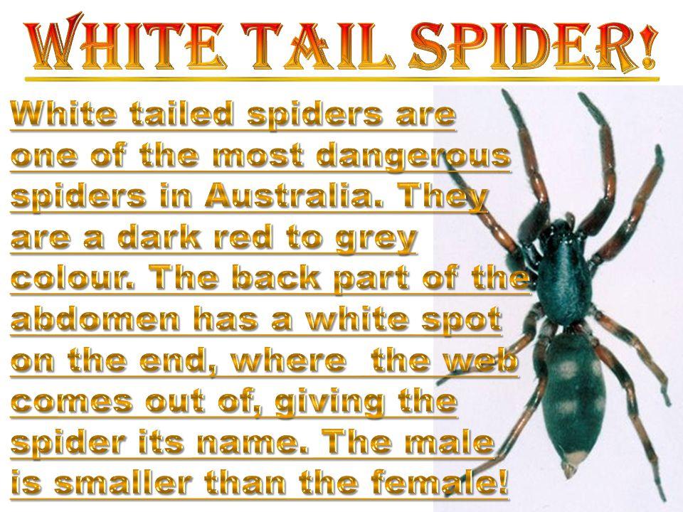 Scorpions are common creatures called arachnids.