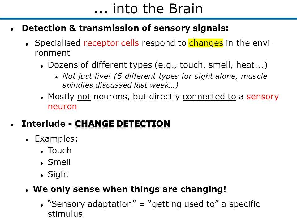 ... into the Brain