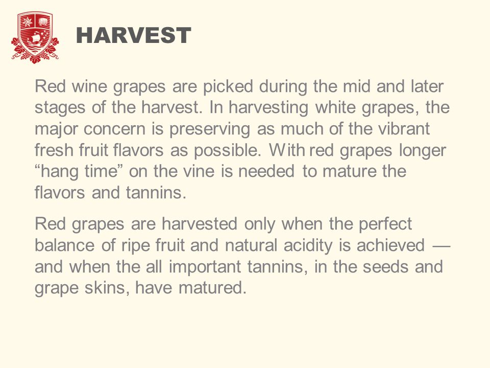 HARVEST Red wine grapes are picked during the mid and later stages of the harvest. In harvesting white grapes, the major concern is preserving as much