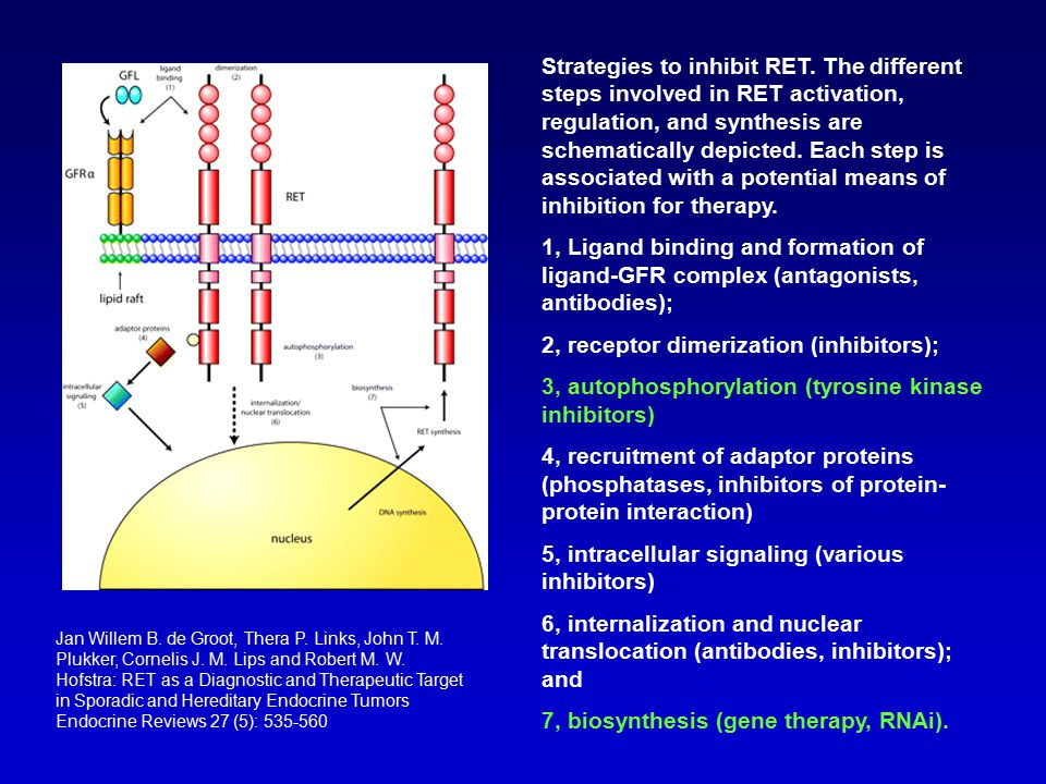 Strategies to inhibit RET. The different steps involved in RET activation, regulation, and synthesis are schematically depicted. Each step is associat