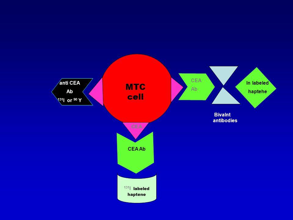 MTC cell CEA anti CEA Ab 131 I or 90 Y CEA Ab 131 I labeled haptene CEA Ab Bivalnt antibodies In labeled haptehe