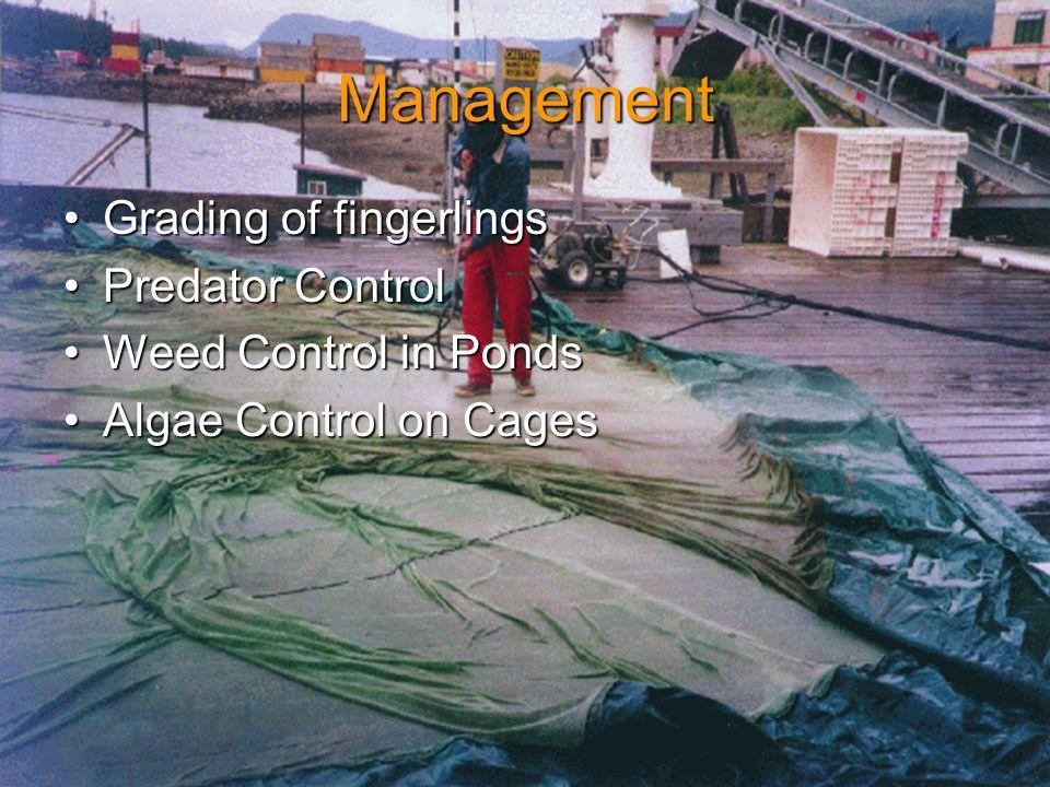 Management Grading of fingerlingsGrading of fingerlings Predator ControlPredator Control Weed Control in PondsWeed Control in Ponds Algae Control on CagesAlgae Control on Cages