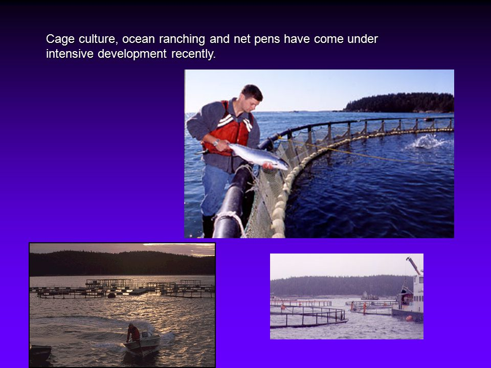 Cage culture, ocean ranching and net pens have come under intensive development recently.