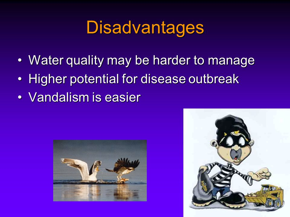 Disadvantages Water quality may be harder to manageWater quality may be harder to manage Higher potential for disease outbreakHigher potential for disease outbreak Vandalism is easierVandalism is easier