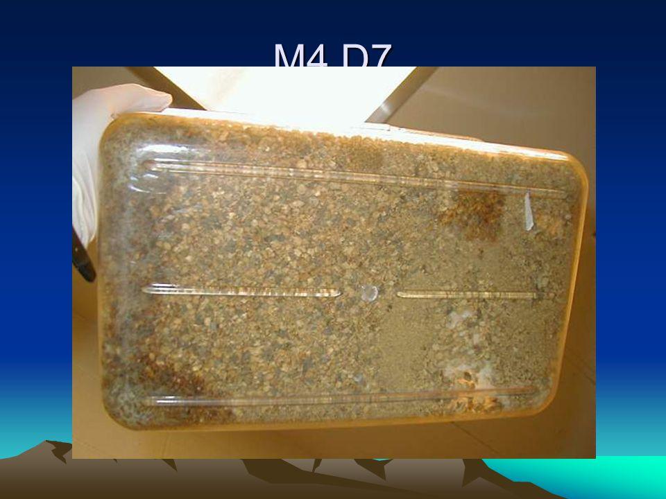 M4 D7