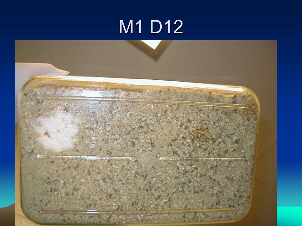 M1 D12
