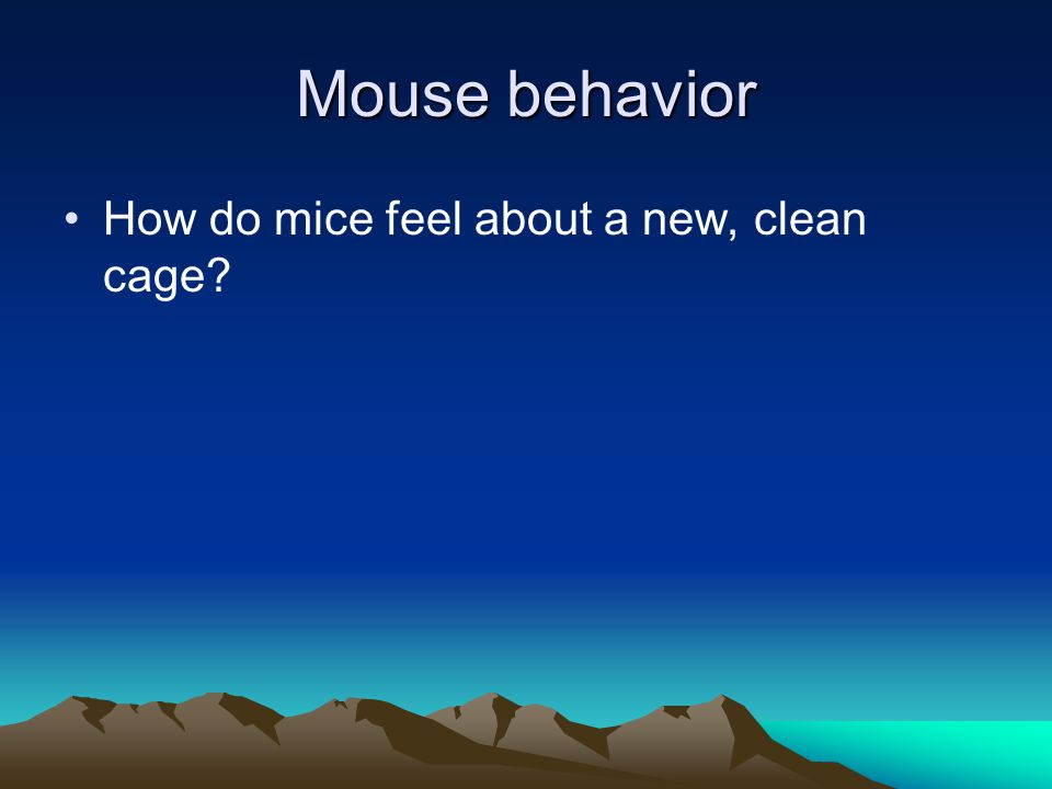 Mouse behavior How do mice feel about a new, clean cage?