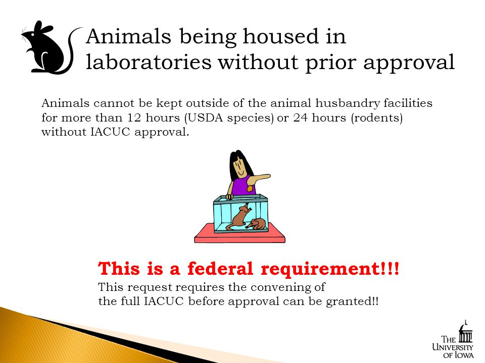 Animals cannot be kept outside of the animal husbandry facilities for more than 12 hours (USDA species) or 24 hours (rodents) without IACUC approval.