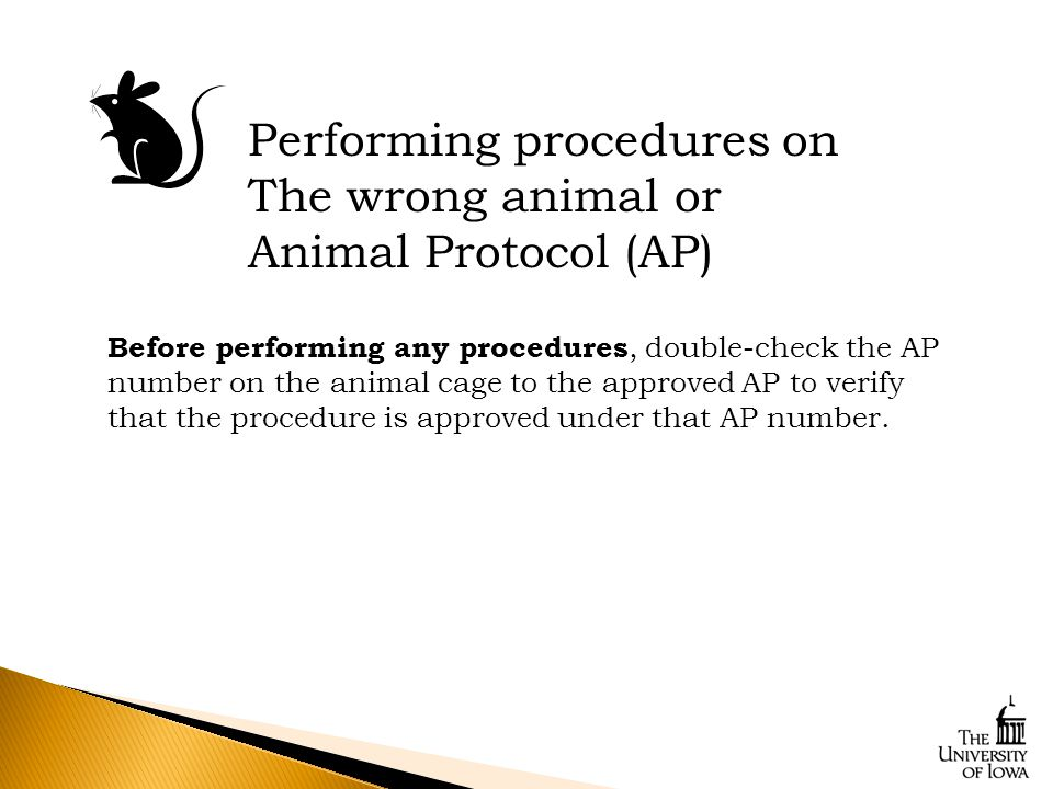 Performing procedures on The wrong animal or Animal Protocol (AP) Before performing any procedures, double-check the AP number on the animal cage to the approved AP to verify that the procedure is approved under that AP number.
