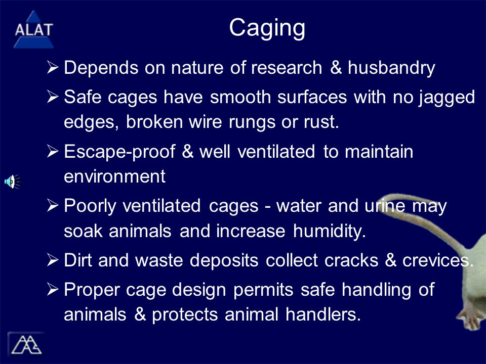 Caging  Depends on nature of research & husbandry  Safe cages have smooth surfaces with no jagged edges, broken wire rungs or rust.  Escape-proof &
