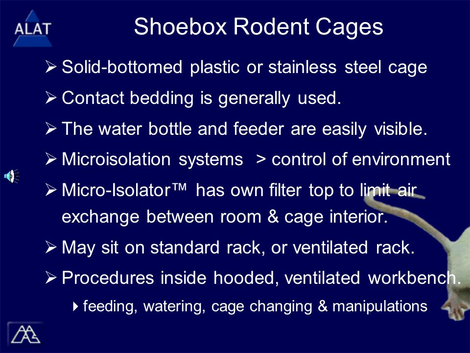 Shoebox Rodent Cages  Solid-bottomed plastic or stainless steel cage  Contact bedding is generally used.