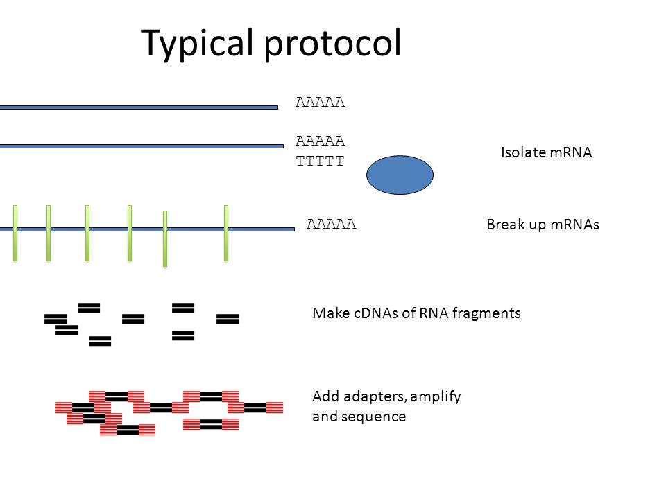 Typical protocol AAAAA TTTTT AAAAA Isolate mRNA Break up mRNAs Make cDNAs of RNA fragments Add adapters, amplify and sequence