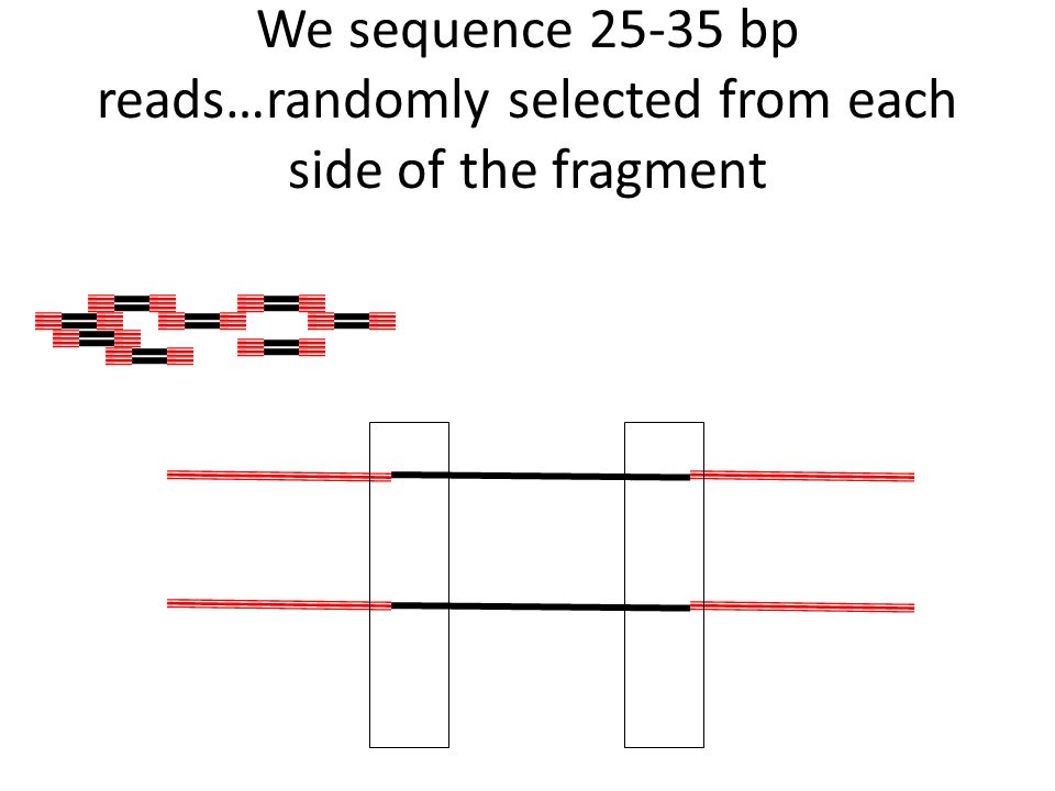 We sequence 25-35 bp reads…randomly selected from each side of the fragment