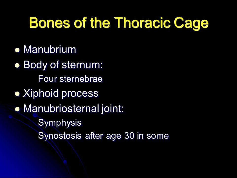 Bones of the Thoracic Cage Manubrium Manubrium Body of sternum: Body of sternum: Four sternebrae Xiphoid process Xiphoid process Manubriosternal joint