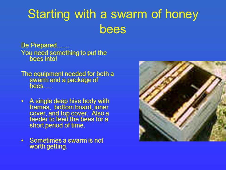 Starting with a swarm of honey bees Be Prepared…… You need something to put the bees into.