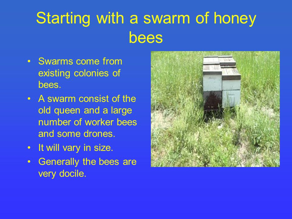 Beekeeping Things to remember about the colony growth of a swarm or package of bees… The population of bees in your new hive will decrease gradually until new bees emerge from cells to replace the bees which die.