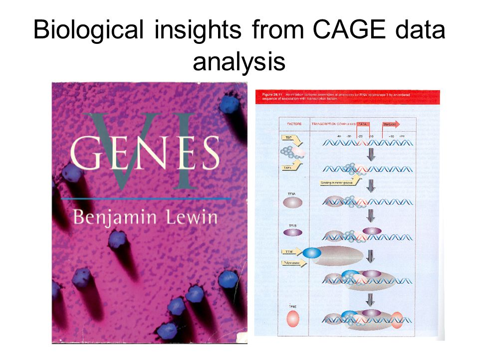 Biological insights from CAGE data analysis