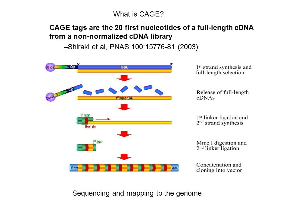 Advantages Large-scale sequencing with no cDNA normalization: –enables localization AND quantification of transcripts/promoters –Enables promoter localization with unprecedented sampling depth (sequence >1 million transcripts in one experiment…) Base-pair resolution, with strand information –Quite impressive validation rates even for single tags (86% true positives by RACE) Unbiased in terms of location: genome-wide Different RNA populations can be sequenced and compared