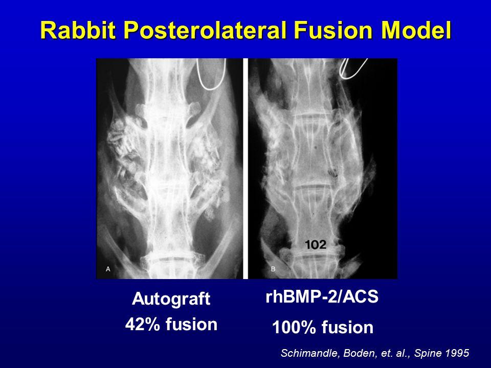 Rabbit Posterolateral Fusion Model Autograft 42% fusion rhBMP-2/ACS 100% fusion Schimandle, Boden, et.